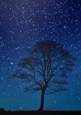 A picture of a black tree against a star-filled night sky